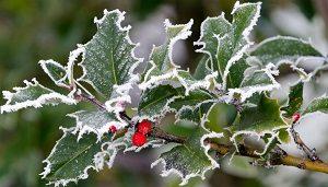 téli fagy a kertben