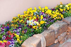 virágba borul a kert